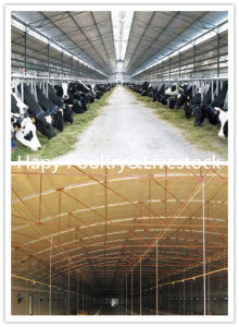Low Cost Prefabricated Steel Structure Cattle/Pig/Chicken House pictures & photos