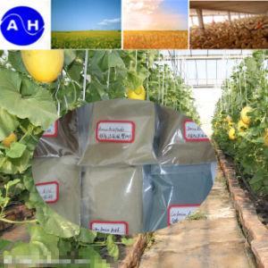 Organic Boron Amino Acid Chelate Fertilizer pictures & photos