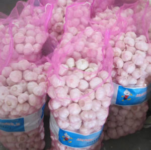 Fresh White Garlic From Origin to Your Warehouse pictures & photos