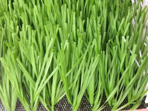 High Quality Monofilament Artificial Turf for Sport pictures & photos
