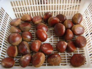 Professional Exporting 2016 New Season Best Fresh Chestnut pictures & photos