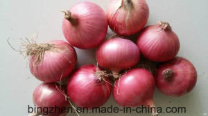 5.0cm New Crop Fresh Red Onion in Meshbag From China, pictures & photos