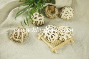 Dried Flower Mushroom, Yongxing Shiitake Mushroom pictures & photos