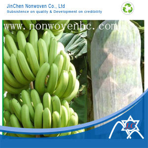 PP Nonwoven Fabric for Banana Cover pictures & photos