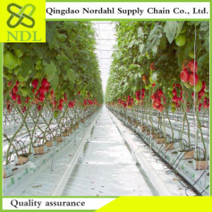 Agricultural Dual Row Hydroponics Greenhouse Planting System Hot Sale pictures & photos