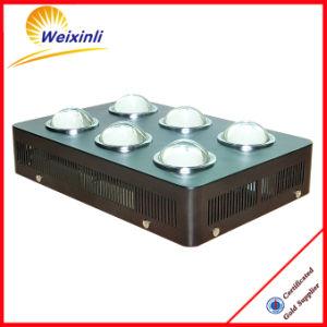 Factory Price Wholesales Epistar Chip 3W COB LED Grow Light pictures & photos