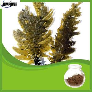 Natural Wakame Kelp Extract Fucoxanthin Powder pictures & photos