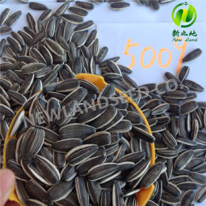 Sell Chinese Black Sunflower Seeds Market Price 5009 pictures & photos