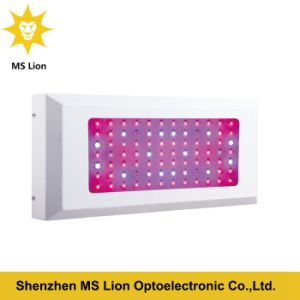 3 Years High Quality Hydroponic Greenhouse LED Grown Light pictures & photos
