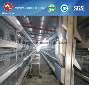 H Type Poultry Equipment for Broilers pictures & photos