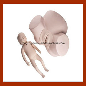 High Quality Medical Midwifery Training Model, Pelvis with Fetal Head Practice Model pictures & photos