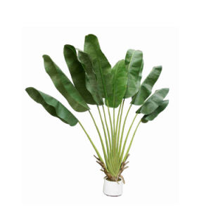 Decorative Artificial Banana Plant Trees pictures & photos