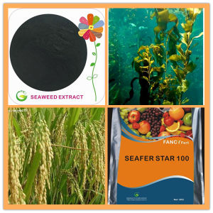 Water Soluble Kelp Powder Alge Extract Seaweed Fertilizer pictures & photos