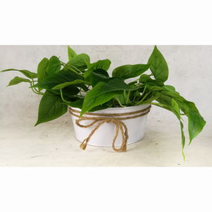 Round Tin Galvanized Garden Pot Flower Pot pictures & photos