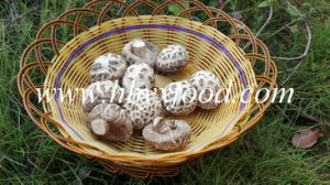Brands Mushrooms, White Flower Shiitake, Dried Vegetable pictures & photos