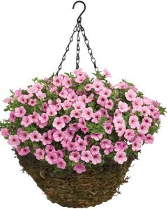 Fern Moss Coconut Fiber Hanging Basket with Chain pictures & photos