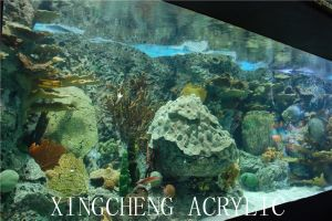 Oceanarium Acrylic Profile pictures & photos