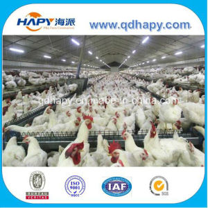 Breeder Chicken Automatic Feeding Equipment in Steel House pictures & photos