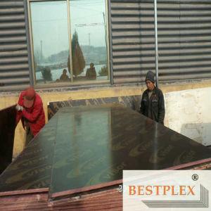 Merino Plex Film Faced Plywood pictures & photos