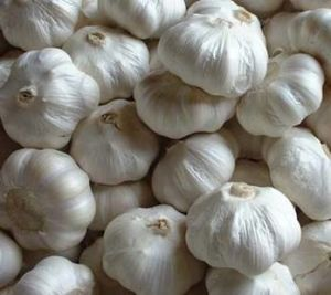 Garlic Extract-Allicin & Alliin