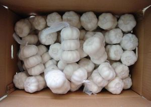 Fresh Pure White Garlic pictures & photos