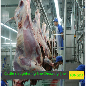Cattle Slaughtering Equipment- Bleeding pictures & photos