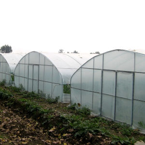 Poly Tunnel for Starwberries Tropical Film Greenhouse for Sale pictures & photos