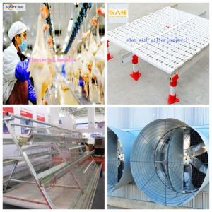 High Quality Professional Equipment in Poultry House with Low Price pictures & photos