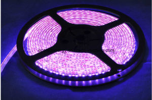 60SMD3528 4.8W/M Pink LED Strip pictures & photos