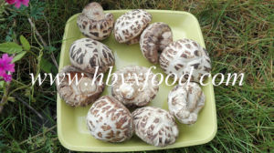 White Flower Shiitake Mushroom Dried Vegetable pictures & photos