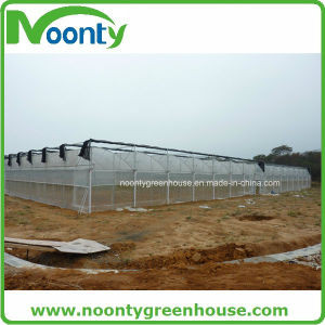 Film Greenhouse, Agricultural Greenhouse, Commercial Greenhouse, pictures & photos