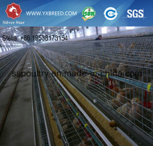 a Type Automatic Chicken Cage pictures & photos