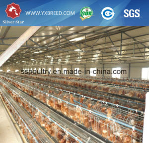 3 Layer a Type Design Egg Chicken Cages with Feeder and Water Pipe pictures & photos