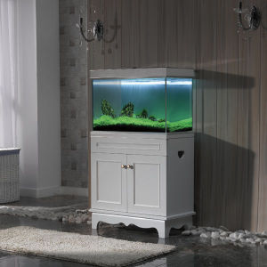 Alive-Plant Glass Tank
