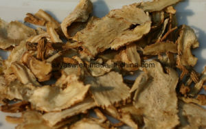 Natural Ligustilide 1% Angelica Extract pictures & photos