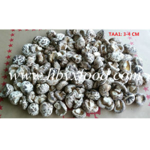 3-4cm Dehydrated Dried White Flower Shiitake Mushroom pictures & photos
