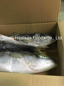 Big Whole Round Yellow Tail Fish (7/8kg) pictures & photos