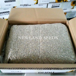 Chinese Most Popular Sunflower Seeds Kernels for Sale and Export pictures & photos