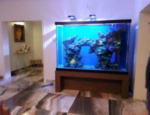 Elegant Acrylic Aquarium Fish Tank with LED Light pictures & photos