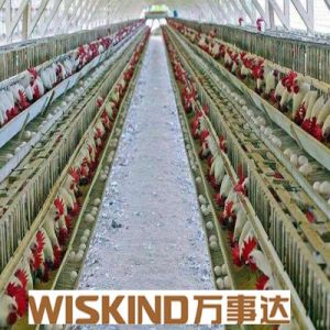 Prefab Galvanized Steel Frame Barn for Chicken Growing pictures & photos