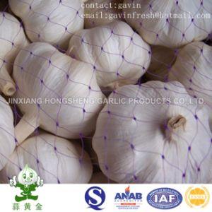 Pure White Garlic/Snow White Garlic From China