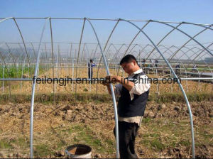 All Kinds of Greenhouse for Sale pictures & photos