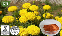 Marigold Extract: Lutein 5%-80%; Zeaxanthin 2%~60% pictures & photos