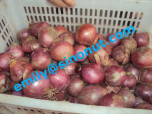 Good Quality Fresh Red Onion 5-7cm pictures & photos