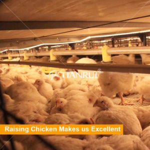 Tianrui design automatic bird-havesting broiler poultry farm house design pictures & photos
