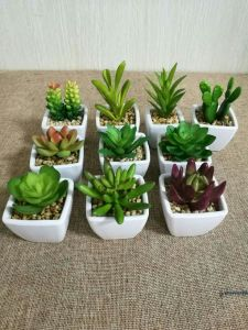 Artificial Plants and Flowers of Succulent Gu824120033 pictures & photos