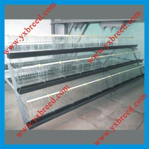 Egg Layer Battery Cages A3l90 pictures & photos