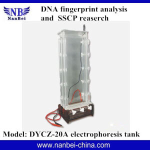 DNA Sequence Analysis Electrophoresis Apparatus pictures & photos