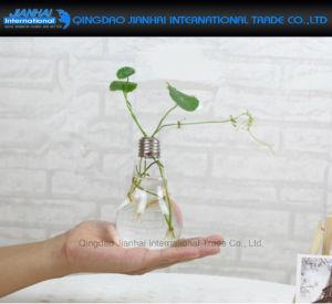 Light-Bulb Shape Glass Vase Stand Flower Terrarium Container pictures & photos