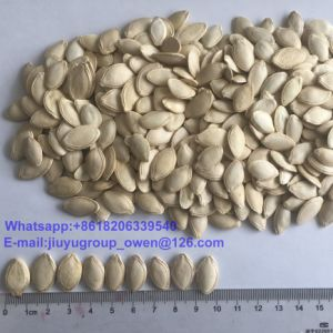 New Crop Raw Pumpkin Seeds Food Grade pictures & photos